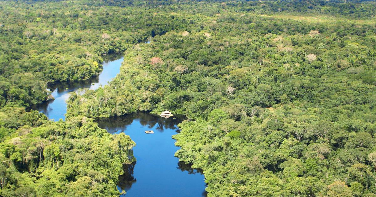 cristalino lodge amazonegebied brazili 235 tico reizen